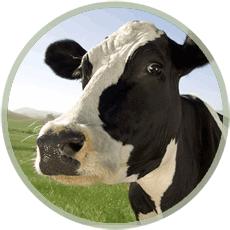 ROUND_ICON_cow_